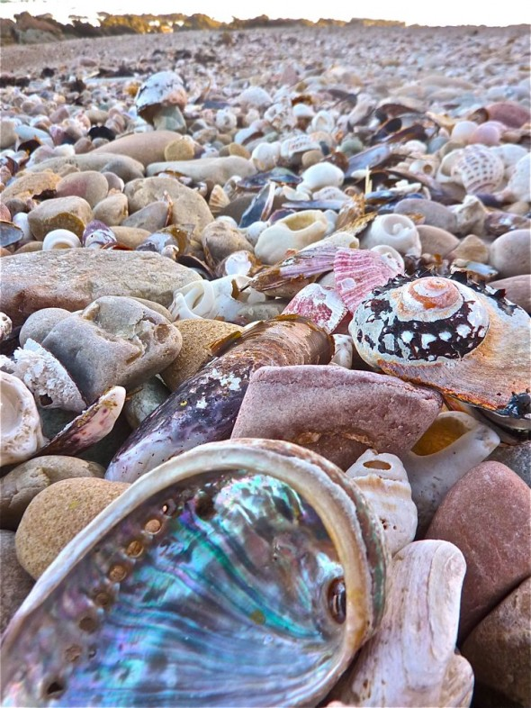Too bad there's no room in your pack to carry any of these beautiful shells home.