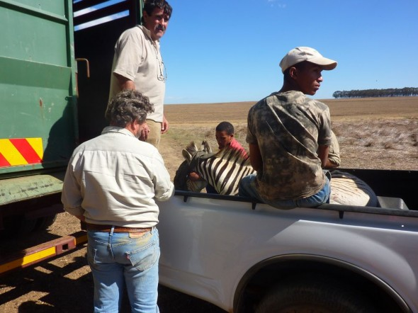 Last Quagga to load.