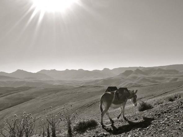 Beer on hooves, Lesotho.