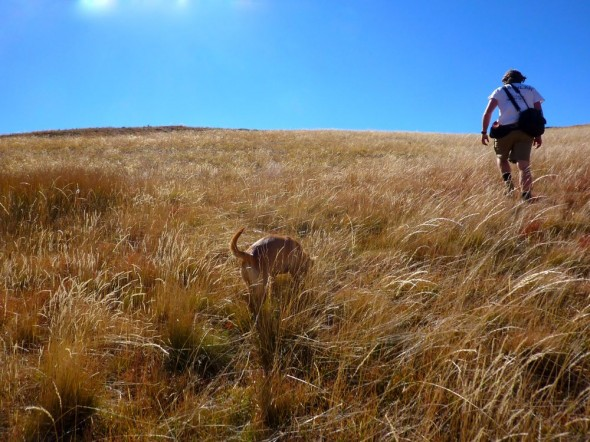 Can you spot Bow Wow? (Lesotho)