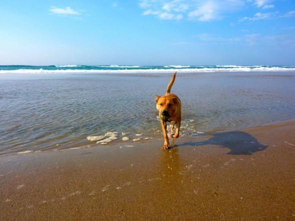 I love Illovo beach, Durban. (Bow Wow)