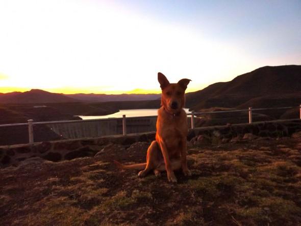 Bow Wow in the setting sun, Katse Dam.