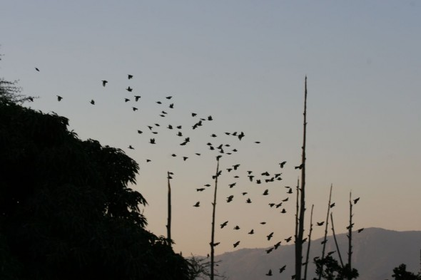 The news of Stepehn Fry's imminent arrival spreads across the savanna. Mlilwane Wildlife Sanctuary, Swaziland.