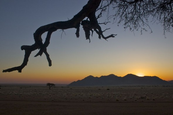 Sunset framed by tree branch at Namtib Reserve, Namibia.