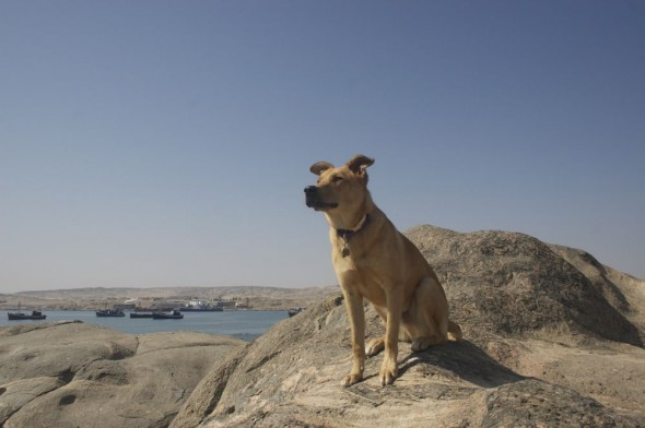 Bow Wow at Shark island, Lüderitz, Namibia.