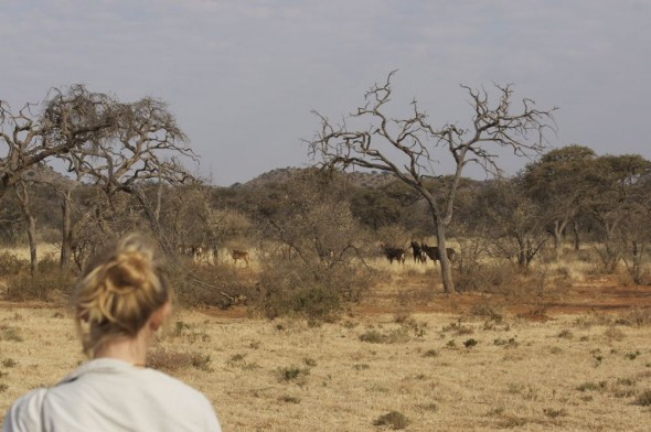 Lucie watching a herd of Sable antelope. Kimberley, South Africa.
