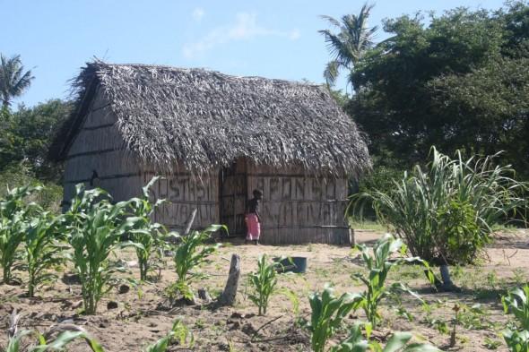 Home alone. Pomene, Mozambique.