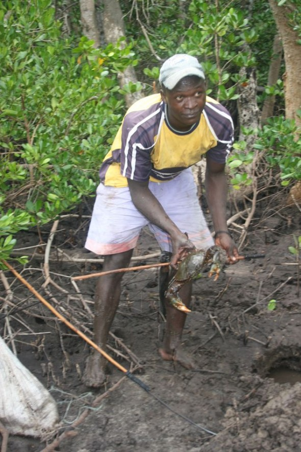 Mangrove crab catcher. Pomene, Mozambique.