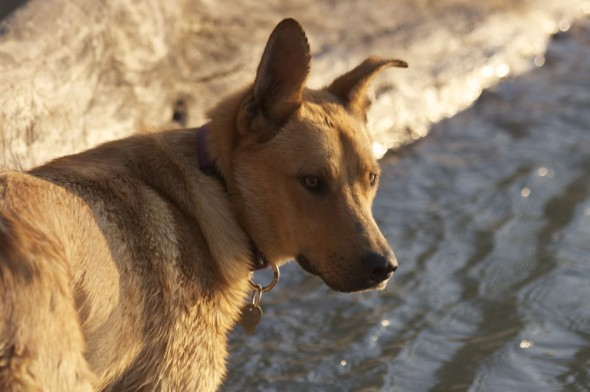 Bow Wow at Epupa Falls, Namibia.