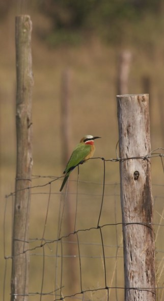 I'm not usually one to sit on the fence. Mlilwane Wildlife Sanctuary, Swaziland.
