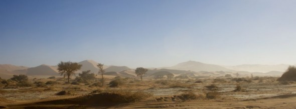The Sossusvlei sand dunes, Namibia, with shrubs and bush. Like an oasis.