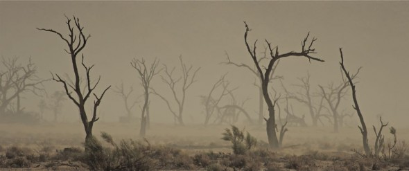 Ghostly eerie trees at the Sossusvlei sand dunes, Namibia.