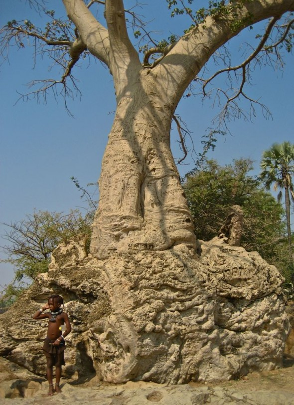 A boy stands in front of a very large, old tree covered in ancient graffiti. Epupa Falls, Namibia.
