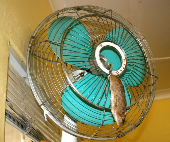 Fake mouse hanging on retro green fan. Kimberley, South Africa.