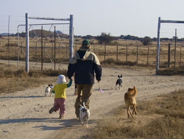 Bow Wow and friends going for a walk on the farm to the dam. Kimberley, South Africa.