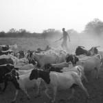 Grootfontein (Photo Diary)