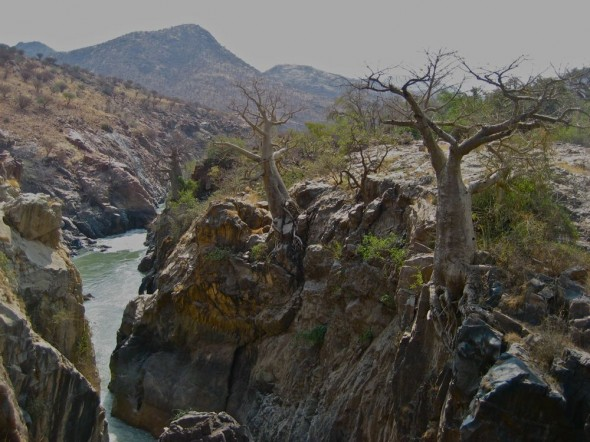 Baobab trees line the Epupa Falls on the Kunene river, Namibia.