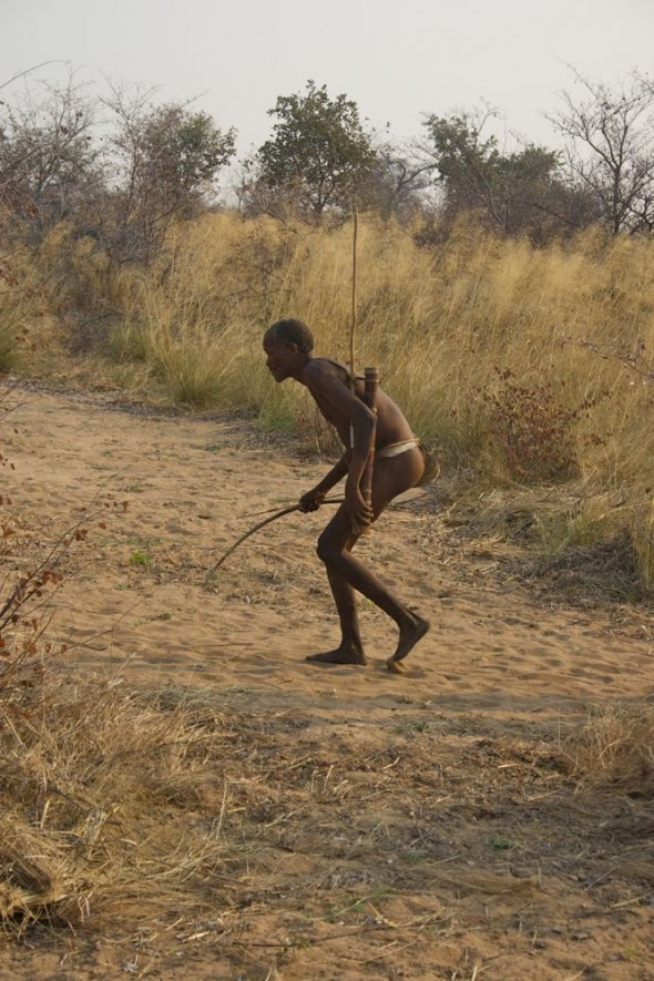 Bushman stalking his prey on a hunt. Ju/'hanse San people, or as they are more commonly known, the Bushmen, near Tsumkwe, eastern Namibia.