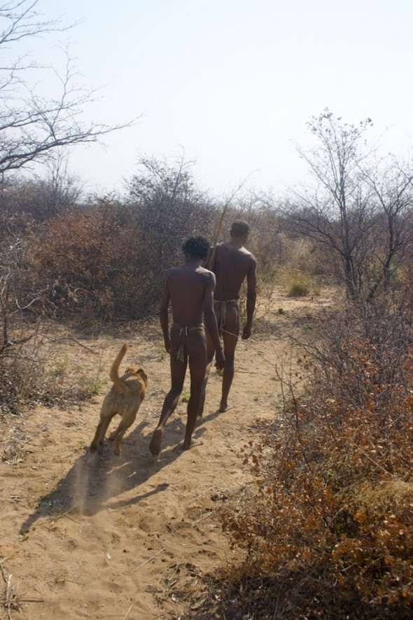 Bushmen off to check the baited bird trap in the morning with Bow Wow. Ju/'hanse San people, or as they are more commonly known, the Bushmen, near Tsumkwe, eastern Namibia.