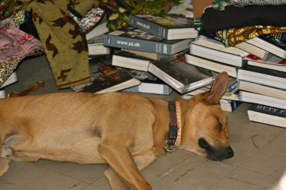 Bow Wow lying down beside piles of books, Harare, Zimbabwe