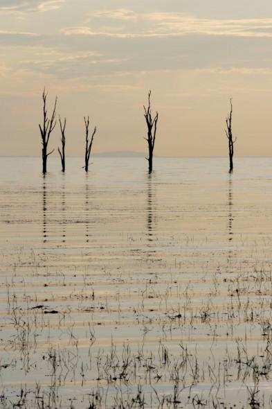 Dead Trees, Lake Kariba, Zimbabwe