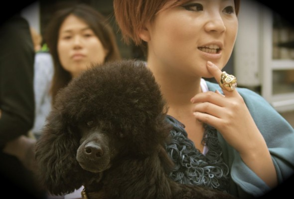 Pickles the poodle at London Fashion Week.