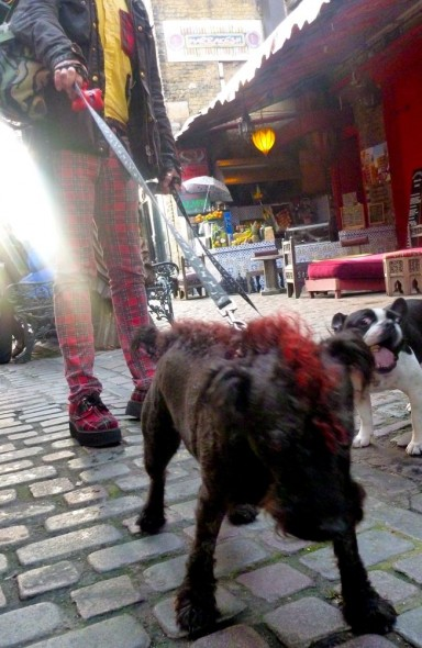 Punk dog with mohawk in Camden, London