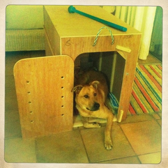 Dog, Bow Wow, in travel crate preparing for plane journey to UK.