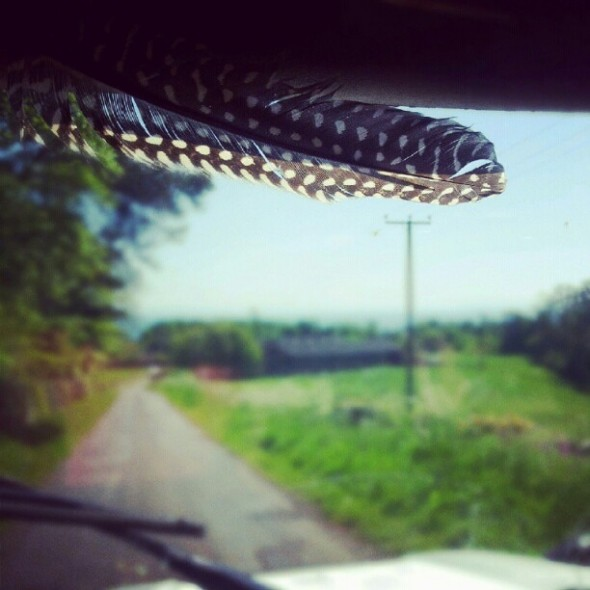 Guinea Fowl feather in Lula the Landy