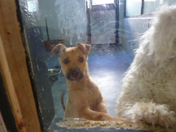 Bow Wow at animal rescue centre DARG in Hout Bay, Cape Town, South Africa