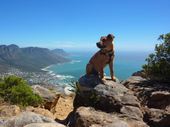Bow Wow on top of Lions Head, Cape Town, South Africa