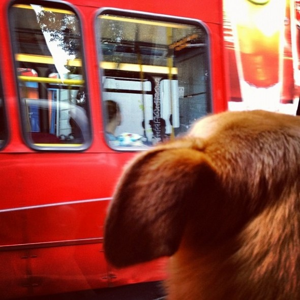 Bow Wow with first glance of London red bus