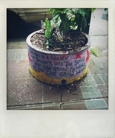 Plant in a painted pot outside Nimbin Museum in New South Wales in Australia. Taken by Miriam McWilliam.