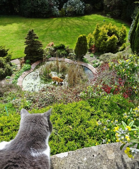 Sascha cat peering down on Bow Wow dog in pond in Dundee, Scotland