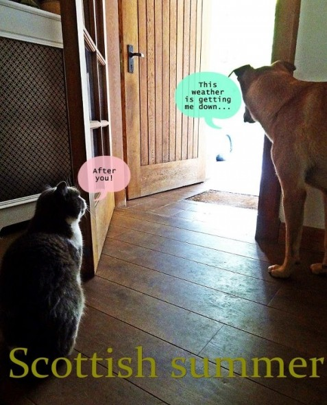 bow wow dog and sascha cat not wanting to go out in scotland rain cold doorway