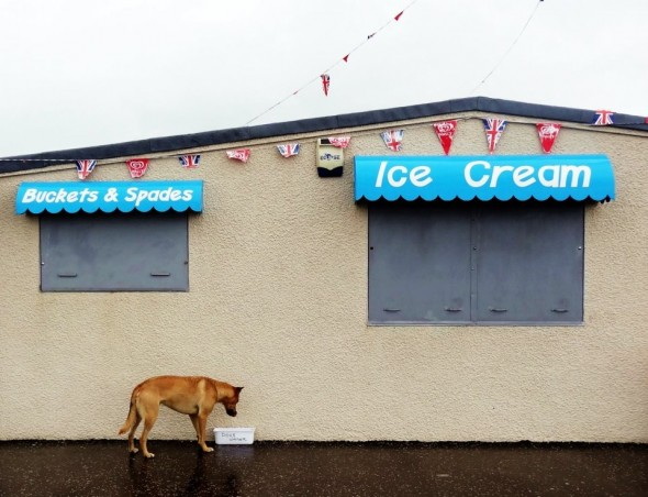 bow wow dog drinking water in front of ice cream shop scotland