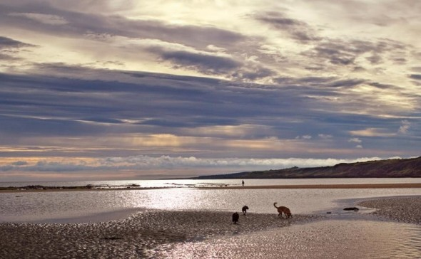 bow wow dog on beach scotland taken by sheenagh mclaren