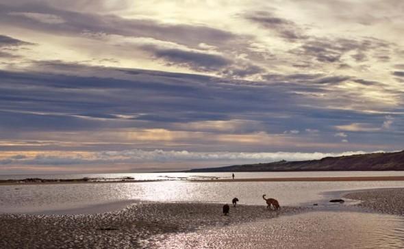 bow wow dog on beach scotland taken by sheenagh mclaren