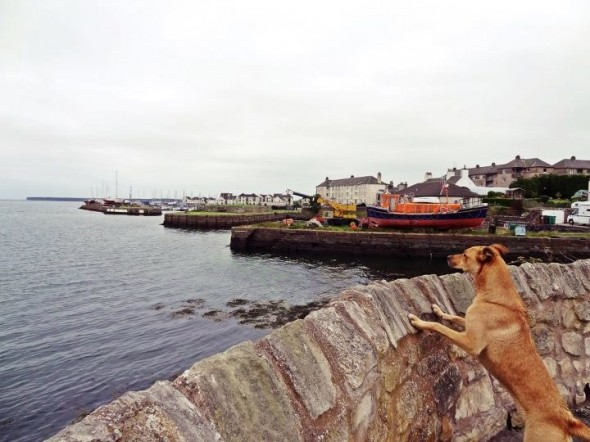 bow wow dog peering over wall out to sea tayport scotland