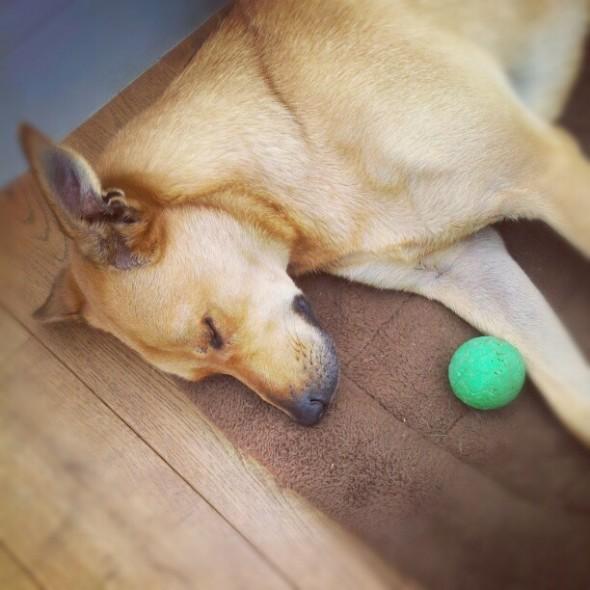 bow wow dog sleeping ball floorboards