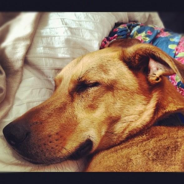 bow wow dog sleeping like a baby