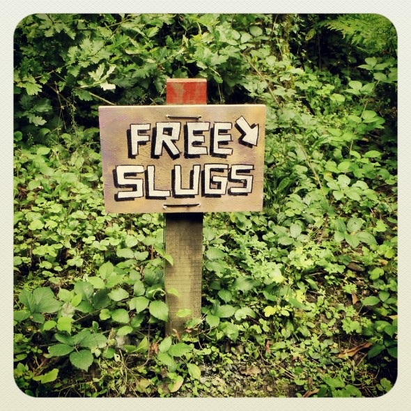 Free Slugs sign at Festival Number 6 in Portmeirion Wales